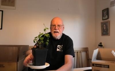 Humleplanta i ölleverans